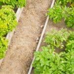 Dividere l'orto in aiuole: progettazione e misure