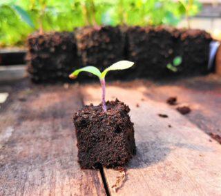 cubetto da semina