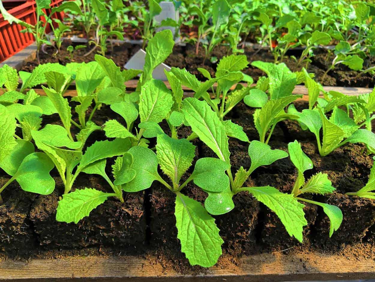 piante in cubetti
