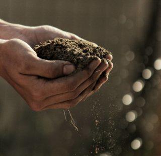 suolo sabbioso