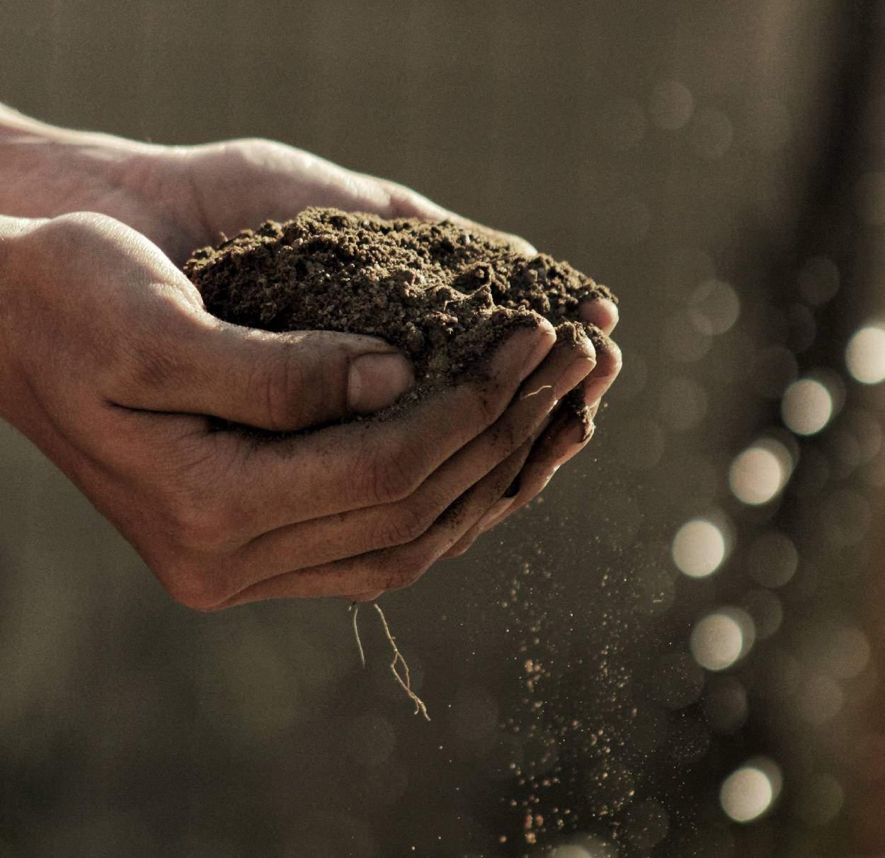 Come coltivare un terreno sabbioso