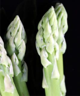 asparagi patologie