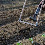 Il suolo vivo dell'orto bio-intensivo