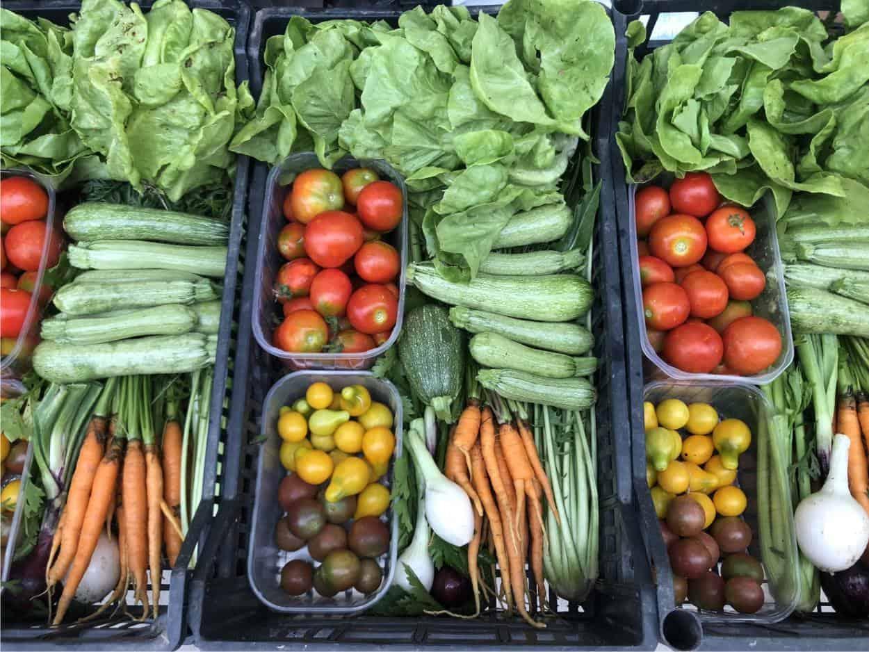 raccolto di ortaggi bio