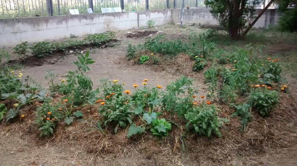 bancali di permacultura