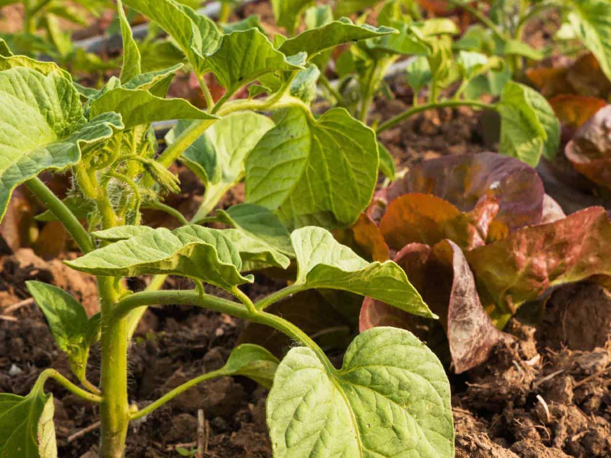 piante vicine