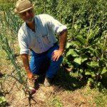 Come mai concimare è inutile, anzi dannoso: coltivazione elementare