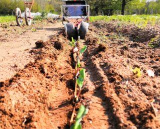 il ciclo coltivatore al lavoro