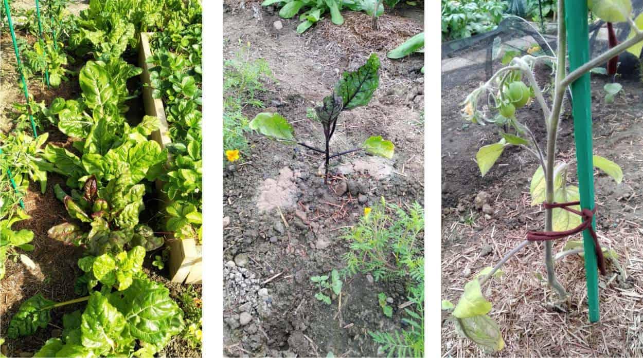 biete, melanzane e pomodori