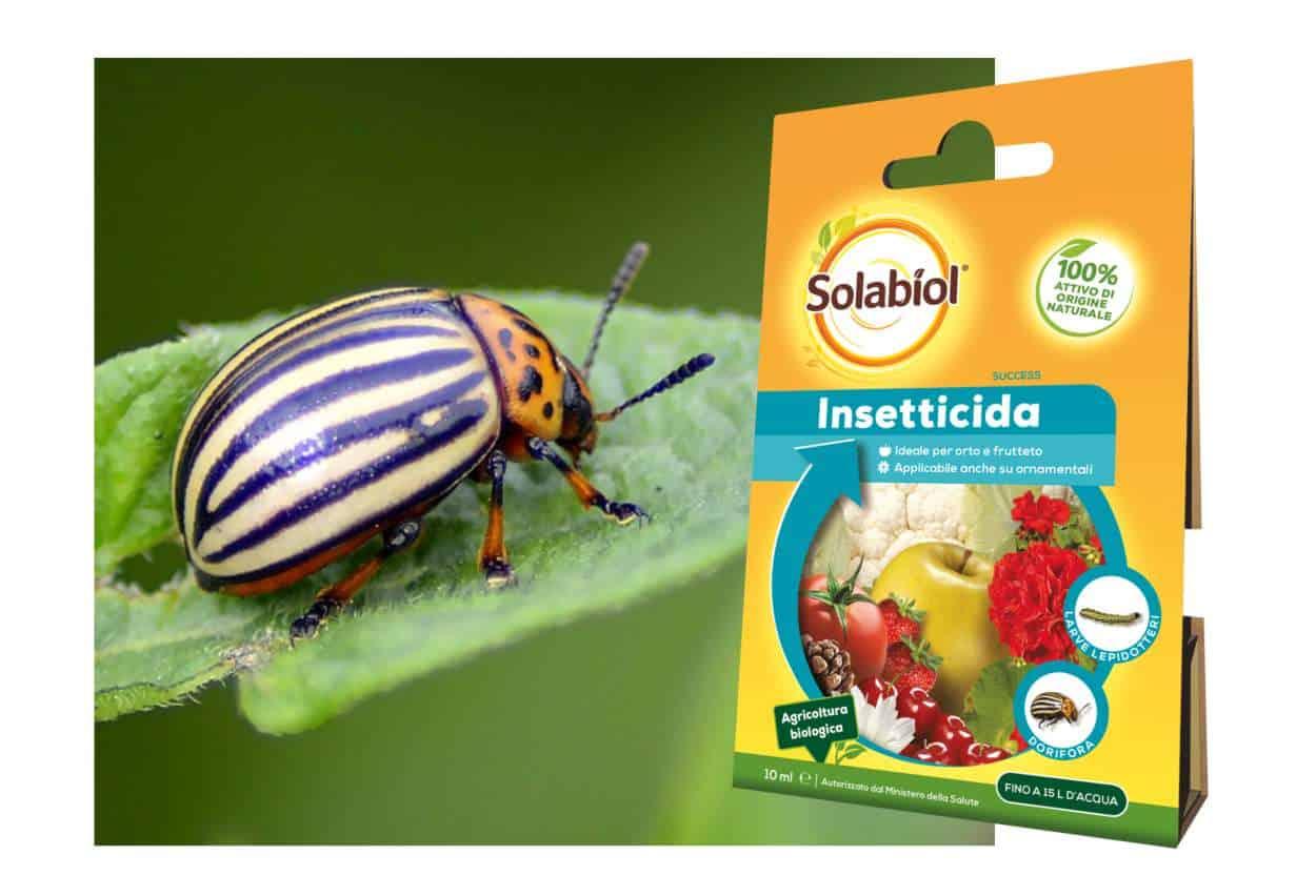 Insetticidi biologici: Success di Solabiol