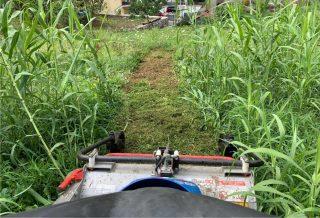 lavoro nell'erba alta