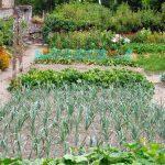 Fare orto conviene? Come risparmiare coltivando