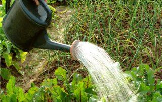 annaffiatoio per irrigare l'orto