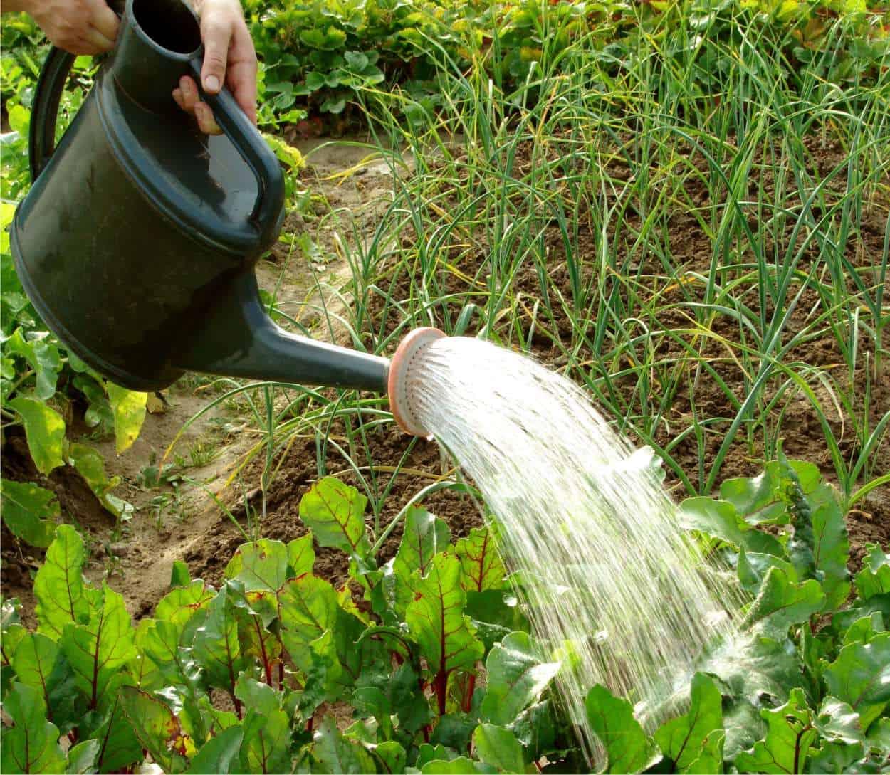 L'irrigazione dell'orto