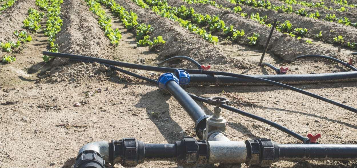 irrigazione di un campo di lattuga