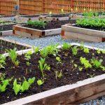 Difendere l'orto dall'inquinamento
