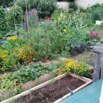 L'orto inglese di agosto: open day, raccolti e parole nuove