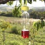 Trappole per difendere l'orto biologico dagli insetti nocivi