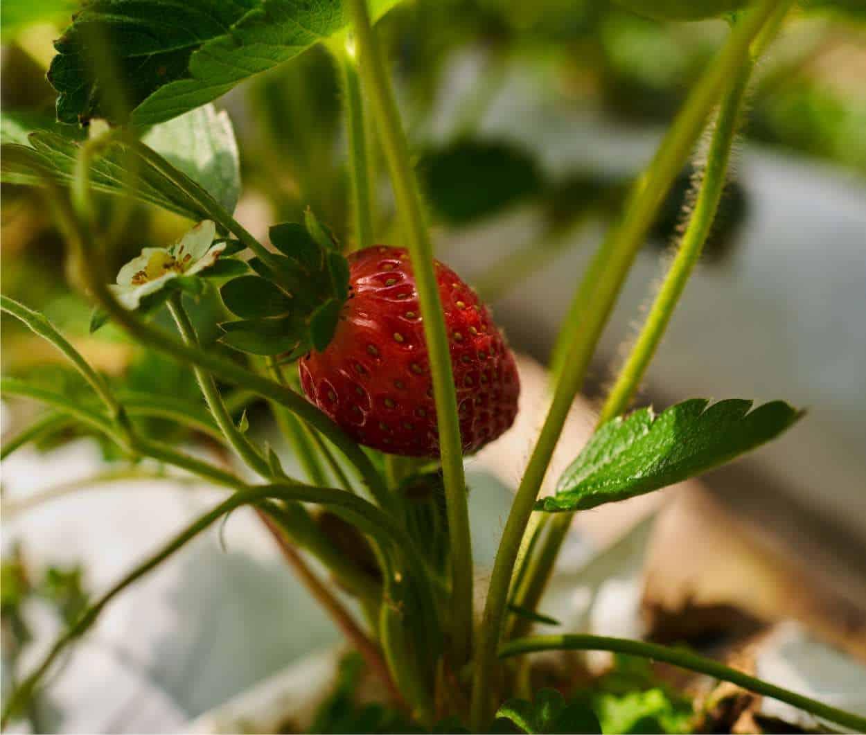 Quali verdure si possono coltivare in vaso