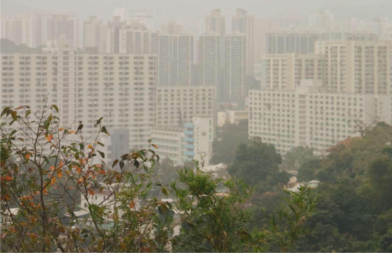 inquinamento e verde urbano