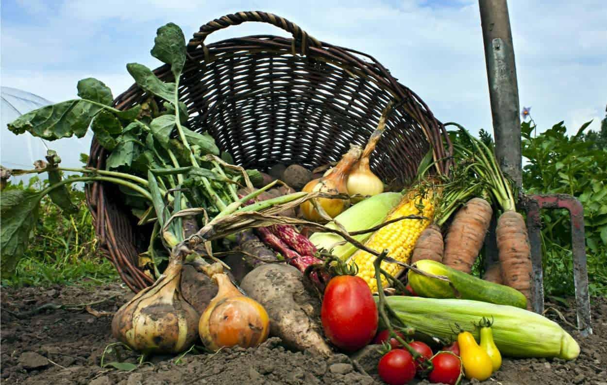 raccolto dell'orto