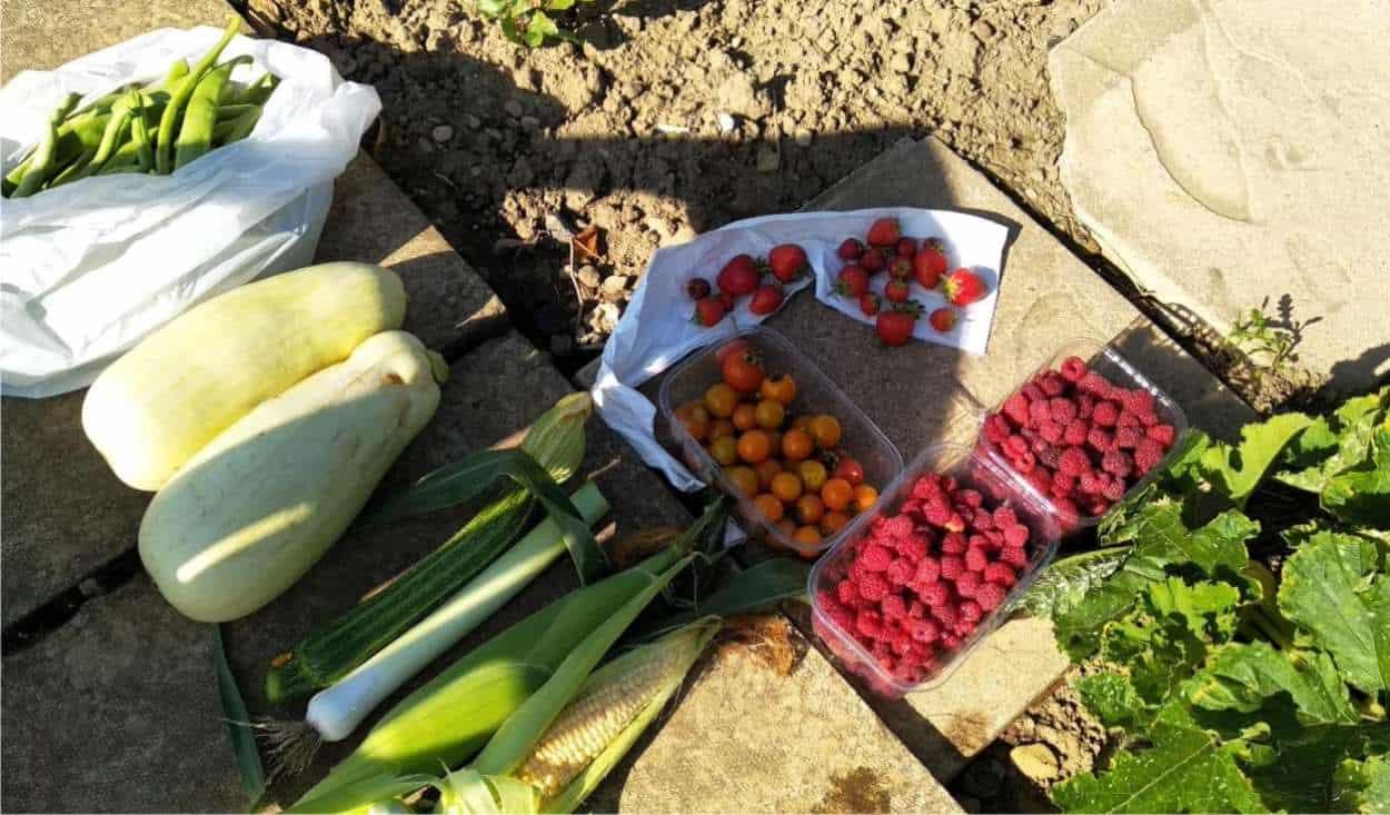 raccolto dell'orto di Lucina