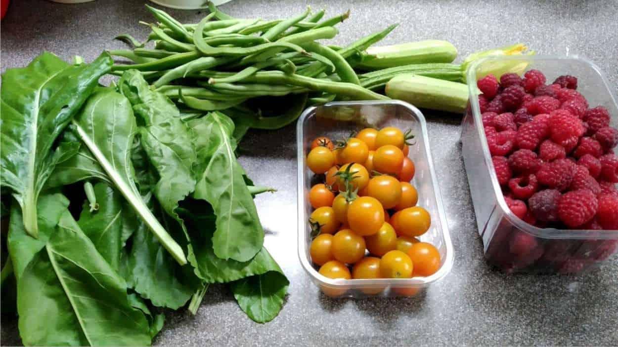 verdure raccolte