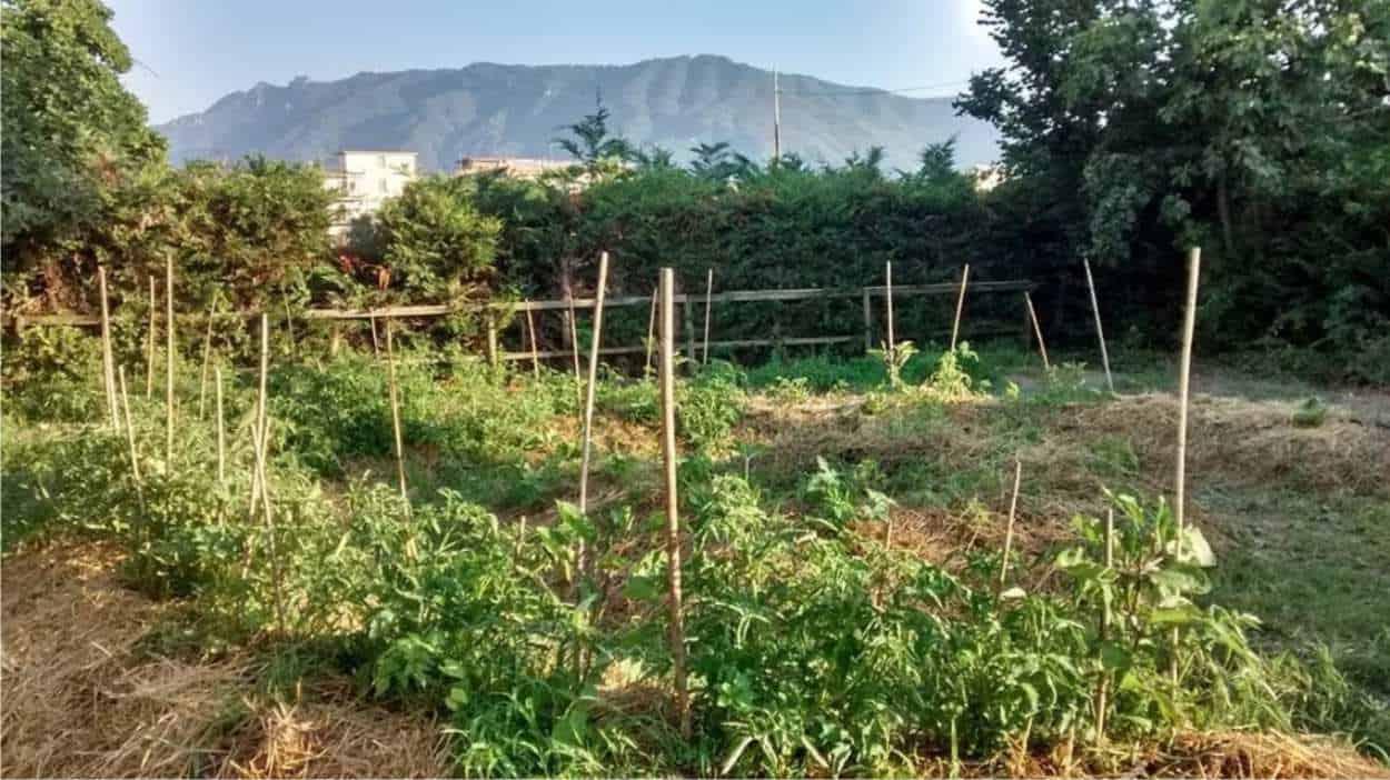 bancali coltivati con metodo sinergico