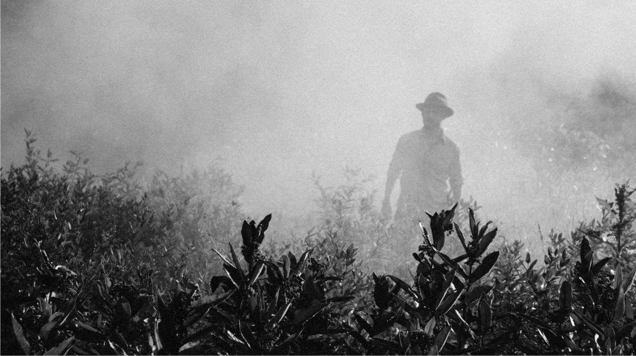 inquinamento da pesticidi
