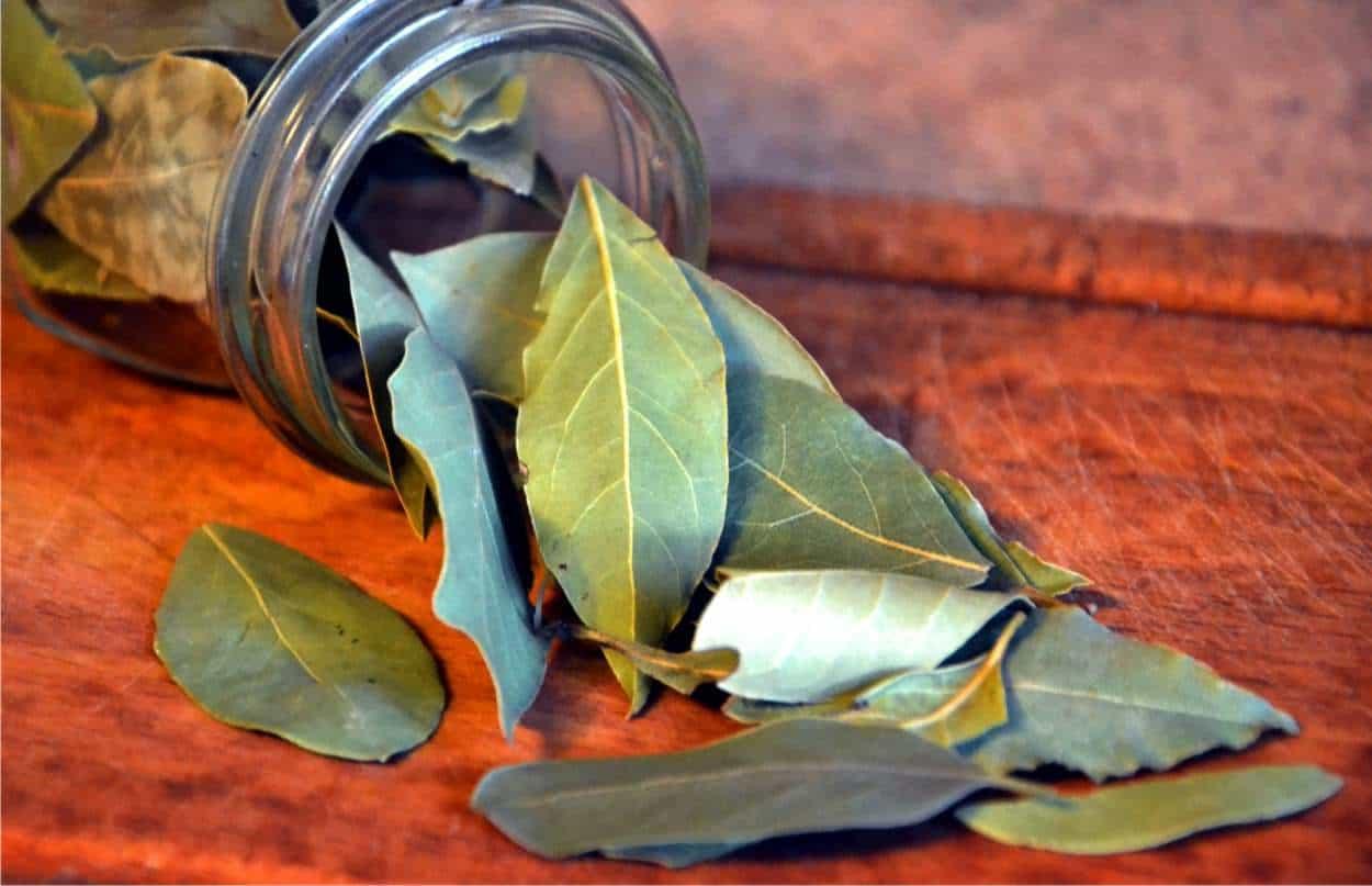 foglie secche di alloro