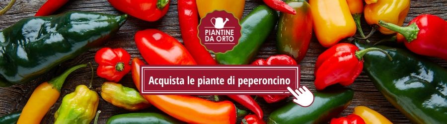 vivaio online di piantine di peperoncino