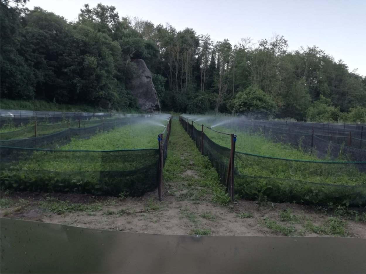 irrigazione nei recinti elicicoli