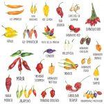 Varietà di peperoncino piccante