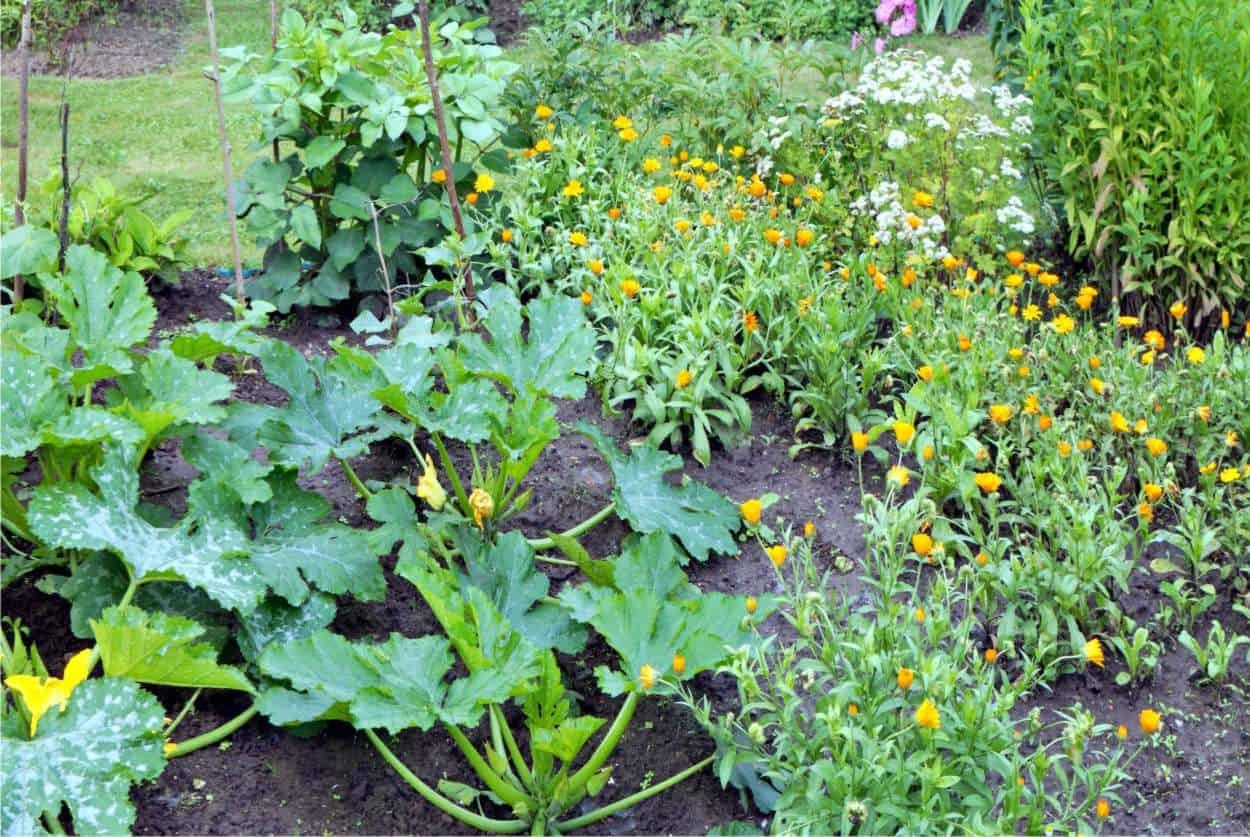 Cosa Piantare A Febbraio coltivare un orto piccolo: consigli per sfruttare ogni metro