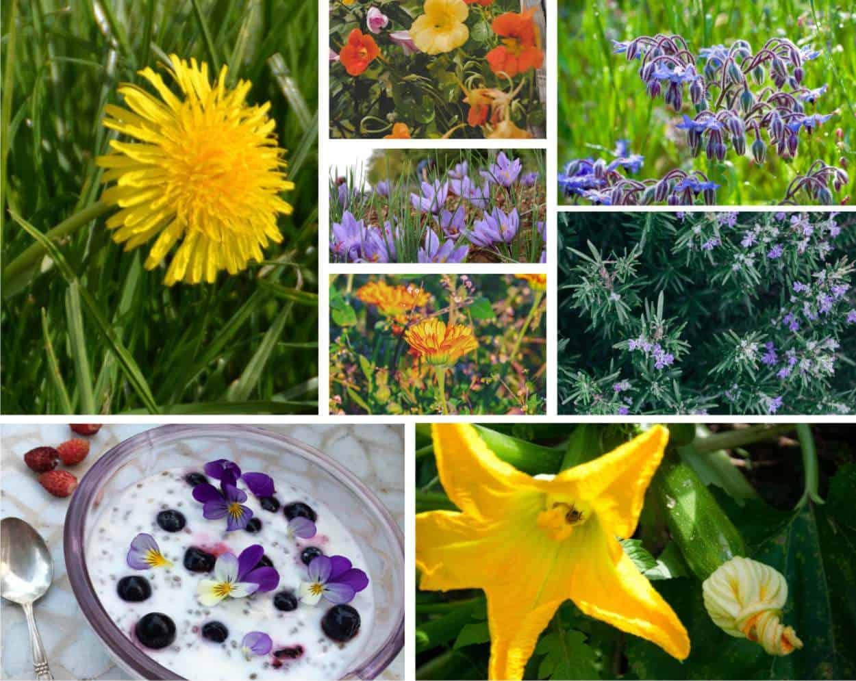 Fiori Da Piantare Nell Orto fiori da mangiare: un elenco di fiori commestibili