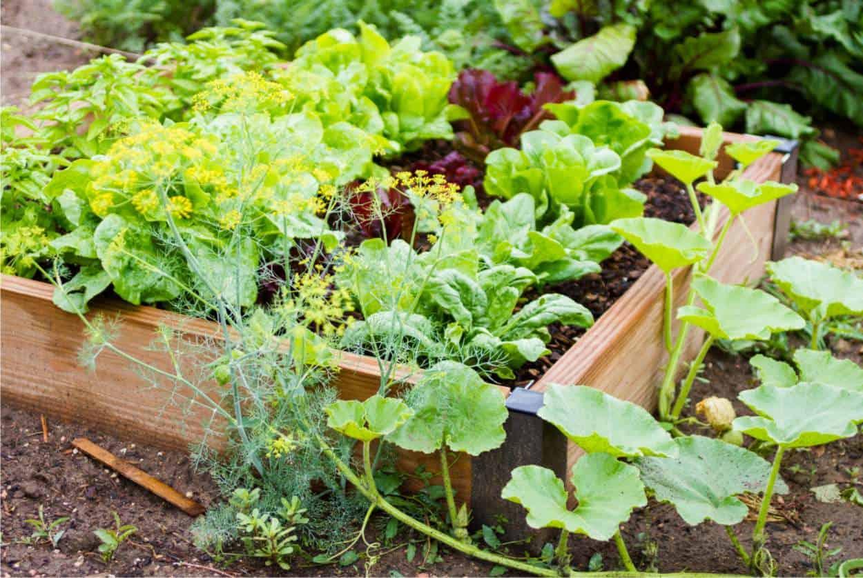 Piante Piccole Da Giardino coltivare un orto piccolo: consigli per sfruttare ogni metro
