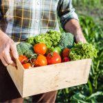 Avviare un'azienda agricola biologica: ottenere la certificazione