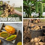 10 ortaggi insoliti da seminare a marzo