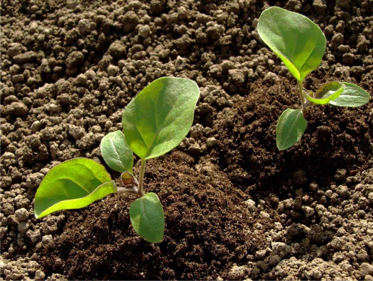 Il governo chiarisce: le piante da orto si possono vendere