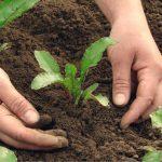 Trovare semi e piantine da orto adesso (e alcune alternative)