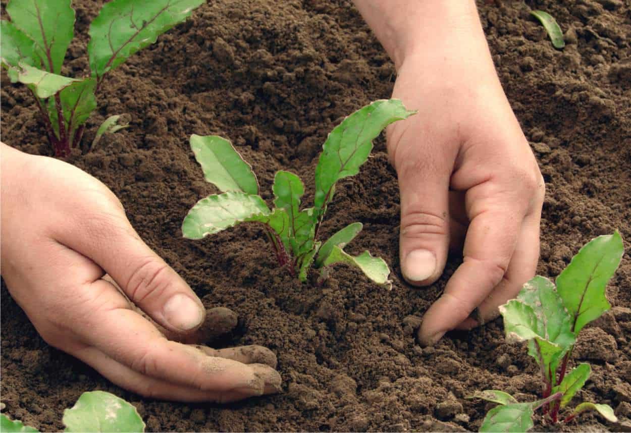 Coltivare In Casa Piante Aromatiche trovare semi e piantine da orto adesso (e alcune alternative)