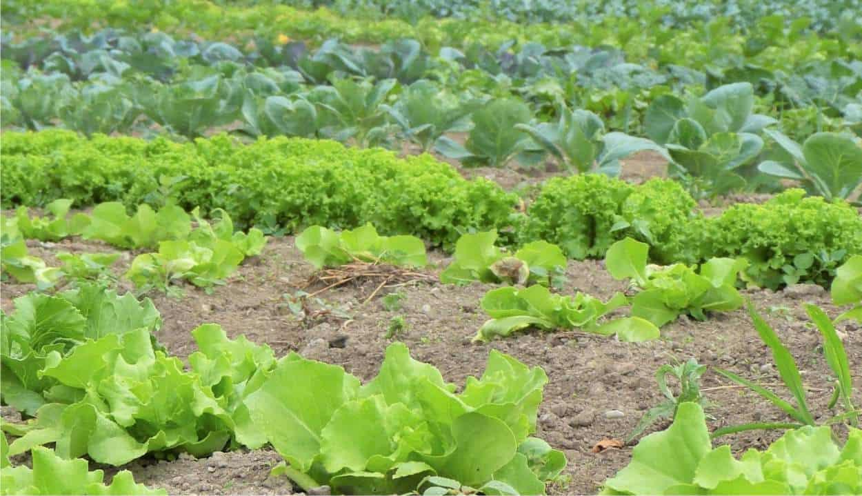 orticoltura bio