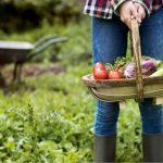 Covid-19: anche in Lazio, Basilicata e Toscana si può andare all'orto