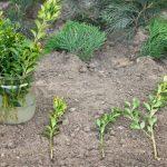 Talea: come moltiplicare le piante da un rametto