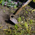 I lavori nell'orto a giugno
