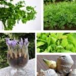 Aromatiche sul balcone: 10 profumi inaspettati