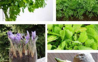 aromatiche insolite in vaso