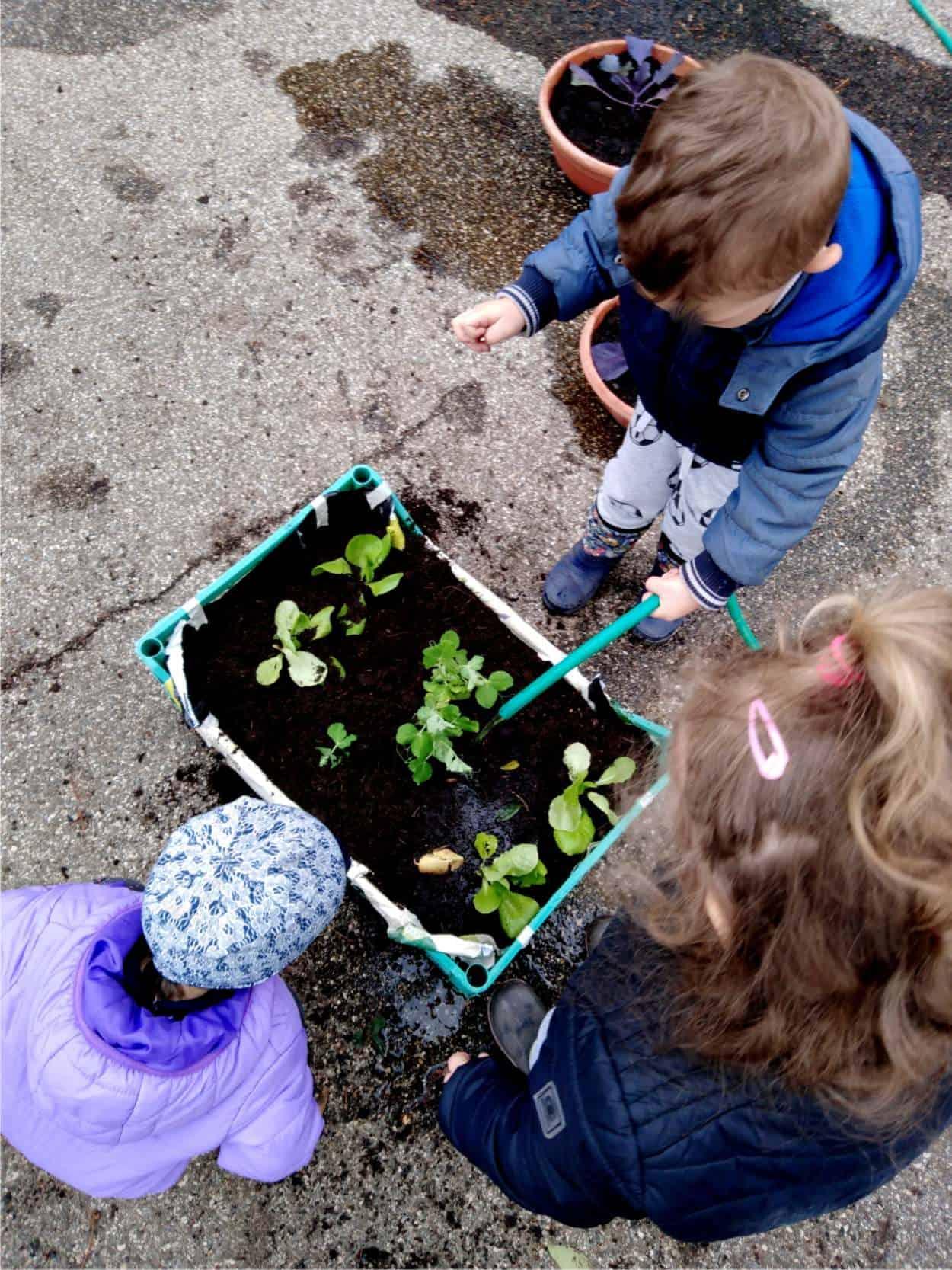 irrigazione orto in cassetta