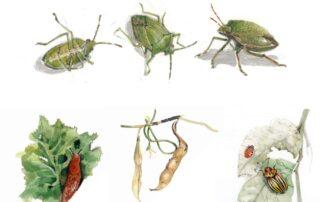 insetti di maggio