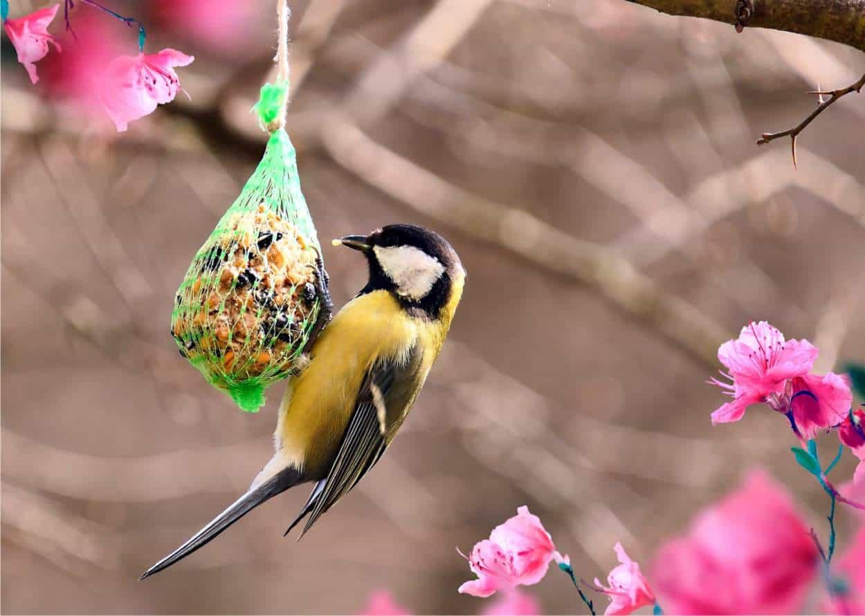 uccelli e cibo